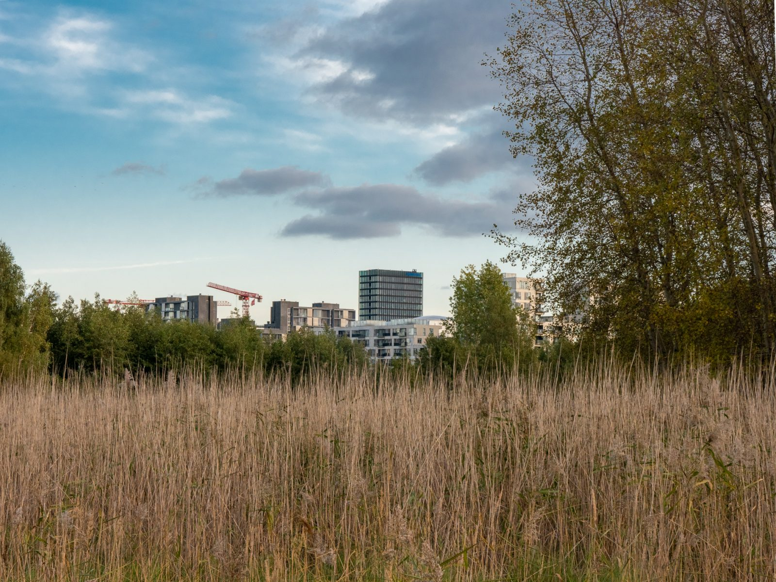Ørestad, fall 2019, by Ørestad based photographer Stefan Grage